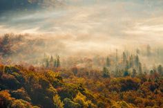 Forêts Brouillard Nature