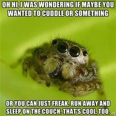 me: gently cups the spider in my hands then cuddles him...after an hour i set him on a table and smash him :/
