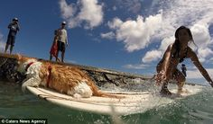 One-Eyed Cat Loves Surfing In Hawaii