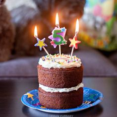 Celebrate your dog's birthdays with a Dog Safe Birthday Carrot Cake!  They will surely LOVE it!