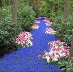 Река из цветов. Кокенхоф, Голандия.