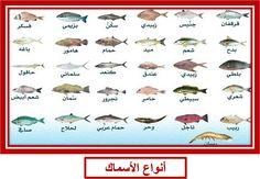انواع الاسماك - بحث Google Types Of Fish, Art, Art Background, Kunst, Performing Arts, Art Education Resources, Artworks