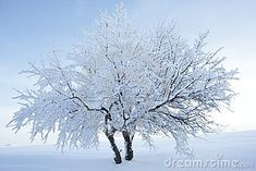 Photo about Two trees covered in snow after a heavy snow fall. Nice metaphor of endurance when united. Image of friendship, united, resistance - 23285804 Two Trees, Cool Backgrounds, The Unit, Snow, Stock Photos, Nice, Plants, Photography, Outdoor