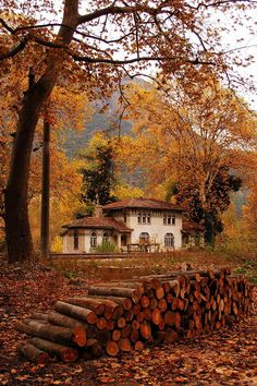 Dogancay railway station - Autumn in Dogancay village, Sakarya  http://trekearth.com/