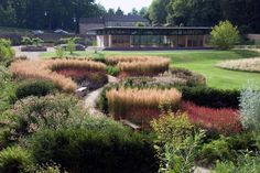 Boughton Hall - Dan Pearson - acheiving   movement and cohesion from perennials that sweep across a path.