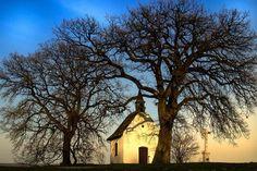 Bátaszék legöregebb fája