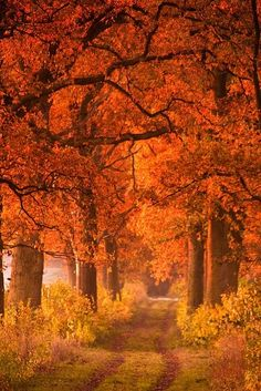 Autumn path beneath the trees
