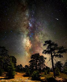 ~~Deep space, deep in the forest ~ astrophotography, Milky Way and stars, Cyprus by CostaDinos~~ Cosmos, All Nature, Science And Nature, Beautiful World, Beautiful Places, Beautiful Sky, Into The Wild, Ciel Nocturne, My Sun And Stars