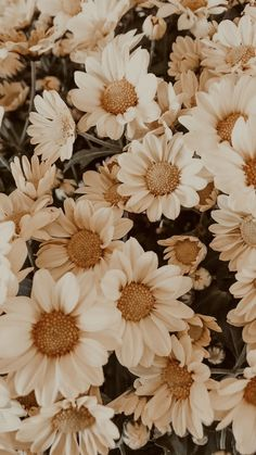 Flower Iphone Wallpaper, Sunflower Wallpaper, Flower Background Wallpaper, Scenery Wallpaper, Cute Wallpaper Backgrounds, Pretty Wallpapers, Vintage Flower Backgrounds, Plant Wallpaper, Iphone Wallpaper Tumblr Aesthetic