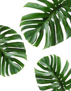 Monstera tropical de arte imprimible la hoja hojas hojas | Etsy