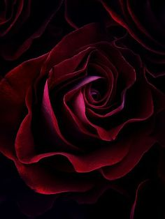 ~♡From within the petals that bore some dark secrets...the fragrance rises and touches the senses of the curious heart♡~: