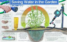 save water gardening yard - Google Search