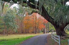 south carolina in fall | South Carolina autumn | Yards...Oh Fun!