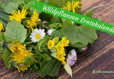 Make your own sage syrup - very simply with two ingredients- Salbei-Sirup selber machen – ganz einfach mit zwei Zutaten Edible wild plants – collection calendar for the whole year - Herbal Tea Benefits, Edible Wild Plants, Hydroponic Gardening, Garden Trees, Medicinal Herbs, Edible Flowers, Tea Recipes, Small Gardens, Amazing Flowers