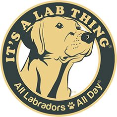 A Lab Named Carlos: Soldier, Decorated War Veteran, Cancer Survivor & Rescue – Its a Lab Thing