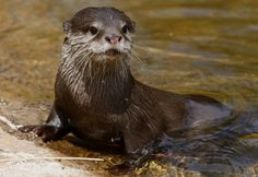 Google Image Result for http://www.happynews.com/showImage.aspx?fn=712008/baby-otters-safe-excursion-stop-pub.jpg