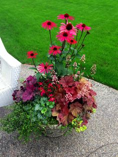 Simply wow!!!!  Beautiful and colorful semi-evergreen container!!  Not sure if I could love heuchera any more than I already do!!  In the container: Big Sky Solar Flare, Alaskan fern, coleus, Berry Smootie (purple) heuchera, Kira (green), Rio (red) heuchera, and variety of ivy.