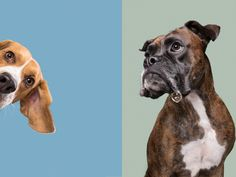 Your dog in the focus! Expert dog photographer Elke Vogelsang Dog photographer Elke Vogelsang is a renown expert for dog photography in Germany and worldwide and offers a unique style of studio photography for dogs. All Nature, Dog Hacks, Animal Photography, Portrait Photography, Dog Portraits, Dog Accessories, Dog Photos, Dog Care, Studio