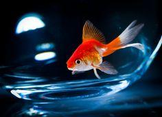 Tierische News: Liebhaber überlegen ständig, wie sie ihr Aquarium verändern können und welche Süßwasserfische am schönsten sind. Hier findest Du...