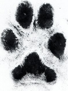tattoo of actual paw print