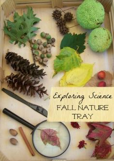 Create a Fall nature tray and explore some hands-on science outside! #autumn #stem