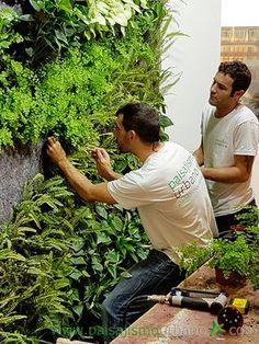 Vertical gardens in Elche – Porronet - Modern Small Courtyard Gardens, Balcony Garden, Small Gardens, Outdoor Gardens, Vertical Garden Design, Vertical Garden Diy, Jardim Vertical Diy, Vertical Farming, Interior Garden