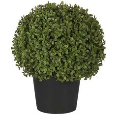 Sia Potted Topiary Boxwood Shrub - Small (€94) ❤ liked on Polyvore featuring home, home decor, floral decor, black, faux topiary, black home decor, boxwood topiary, fake boxwood topiary and fake topiary