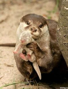 I think otters may be my new favorite animal.