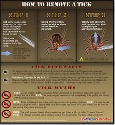 How to Remove a Tick Infographic