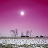 I can only imagine a pink sky!