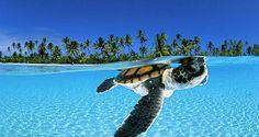 Baby Sea Turtle...<3