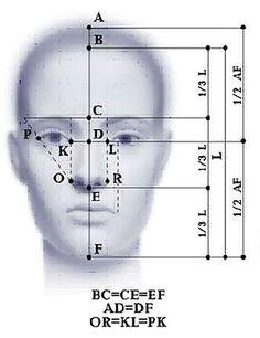 eyes proportional