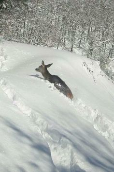 Pobre animal, fue tal la nevada que cayó...