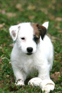 @Sam Kauffmann awwwwww reminds me of cousinpippydoggieloverboo lmao : p