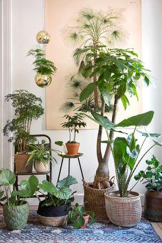 Pin Pa plants