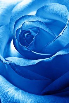 Ƭɦe Ᏸℓueʂ ✿⊱╮  Blue rose for tattoo