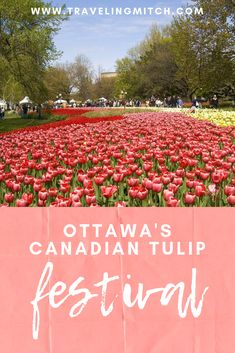 Ottawa's Canadian Tulip Festival, One of the Most Beloved Festivals in Canada — travelingmitch Ottawa Canada, Canada Canada, Montreal Canada, Ottawa Tourism, Vancouver Travel, Exclamation Mark, Short Trip, Travel Photography, Vancouver Photography