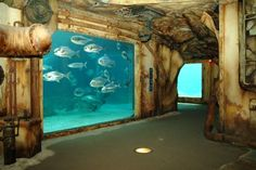 Ushaka-Marine-World: largest aquarium in Africa