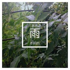 Rain, Japan, Japanese, plants, trees, green ❤ liked on Polyvore featuring home, home decor, floral decor, tree home decor, green home accessories, green tree, green home decor and japanese home decor