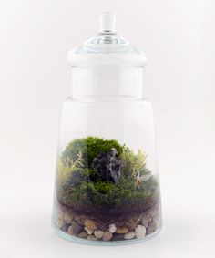 This Enchanted Fairy Terrarium is perfect! #zulilyfinds