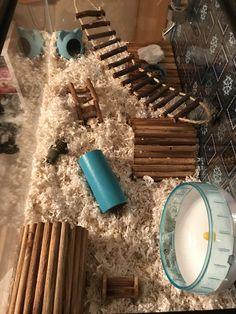 Diy Hamster House, Hamster Life, Hamster Habitat, Baby Hamster, Hamster Homes, Hamster Stuff, Syrian Hamster Cages, Hamster Bin Cage, Gerbil Cages