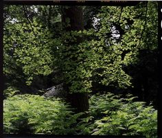 Photographs by Rod Fleming – Portfolio gallery pages Country Roads, Gallery, Plants, Plant, Planting, Planets
