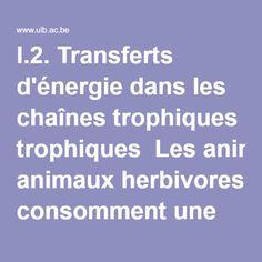 I.2. Transferts d'énergie dans les chaînes trophiques  Les animaux herbivores consomment une partie C1 de PN1. Cette énergie se partage en quatre postes:  accroissement de la taille et du nombre d'individus de la communauté d'herbivores (T2), respiration des herbivores (R2), prédation par les carnivores (C2), cadavres et déchets (L2). Le même raisonnement s'applique aux carnivores (postes T3, R3, C3, L3). Il n'y a pas de poste C3 si les carnivores ne sont pas mangés par des prédateurs…