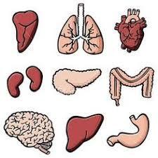 Výsledok vyhľadávania obrázkov pre dopyt ľudské telo v mš