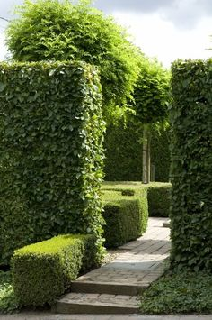 tall laurel hedge clipped as a block with low boxwood hedge along walkway also clipped as a block