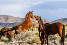 Wild Horse Safaris offers tours in Central Nevada near the Humboldt-Toiyabe National Forest. You can also view mines, ghost towns, and Native American sites on their tours.