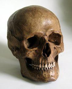 Human Skull Replica van artskulls op Etsy