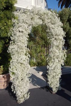 Baby's Breath Arch at Cannon's for Yasmine
