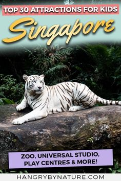 Discover the ultimate list of the best places to go with kids in Singapore. Theme parks, zoos, safaris, waterparks, aquariums & more to add to your list. Thailand Travel, Asia Travel, Japan Travel, Croatia Travel, Bangkok Thailand, Hawaii Travel, Italy Travel, Singapore Travel Tips, Singapore Itinerary
