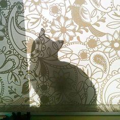 Gatos que se esconden #estásegurodequenoloveo #dóndeestaráfloppito? #instacat #catstagram #ilovemycat #floppyelgato